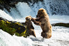 Mother bear disciplines cub stealing her fish