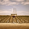 20090531_Stock_Wine_Sonoita-2