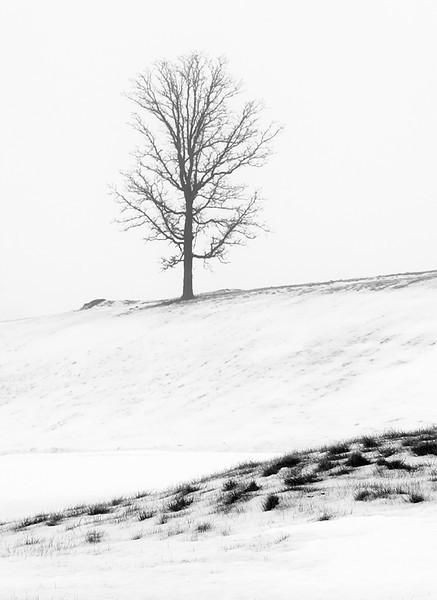 Tree - Erin Hills Golf Course