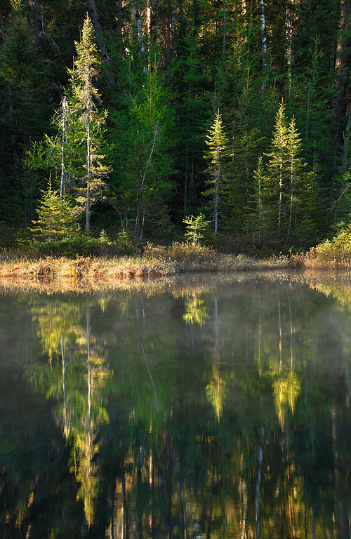 Tree Reflections (Northern Highland American Legion State Forest - Wisconsin)