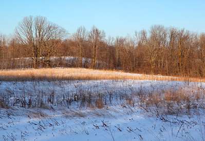 Windswept - Kettle Moraine State Forest (Northern Unit)
