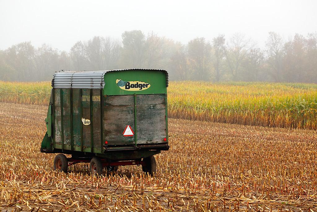 Wagon in Corn Field - Washington County (Wisconsin)