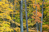 Autumn (Kettle Moraine State Forest - Northern Unit)