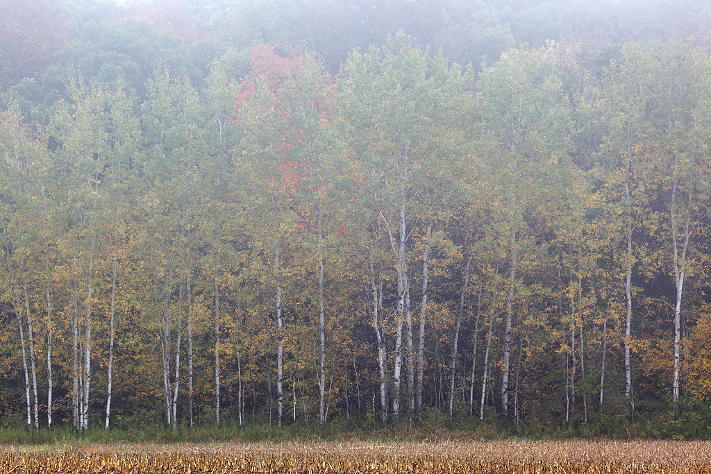 Fall II (Kettle Moraine State Forest - Northern Unit)