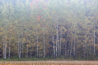 Fall I (Kettle Moraine State Forest - Northern Unit)