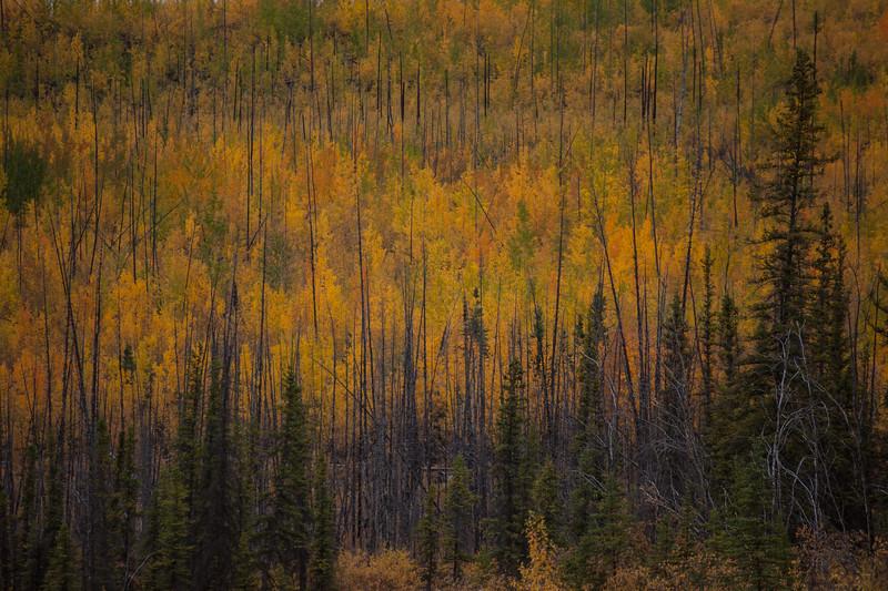 YT-2012-028: Klondike Highway, Klondike Region, YT, Canada