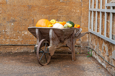 Pumpkins and squashes in wooden barrow