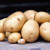New potatoes Casablanca