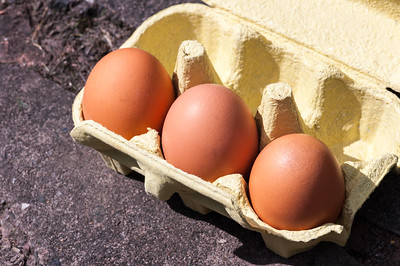 Eggs in box 5