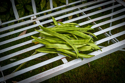 Runner beans on bench