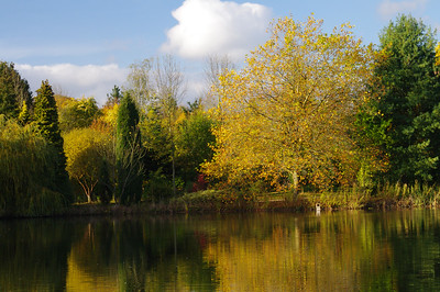 Lake and Autumn trees