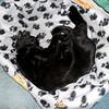 Black cat in basket