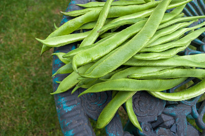 Runner beans with space at side.
