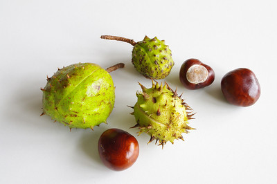 Conkers and prickly cases.