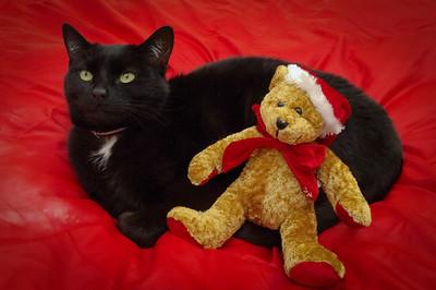 Black cat and Santa teddy.