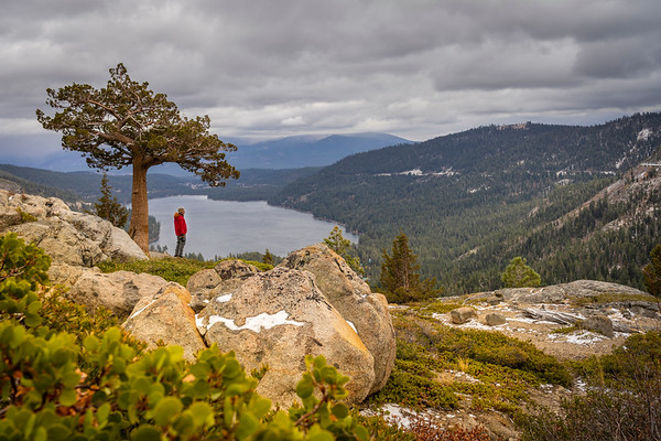 Man with Tree on Donner Lake