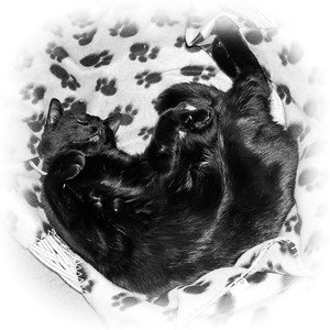 Black cat in basket