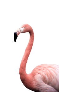 Flamingl