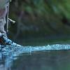 Trout Fisherwoman