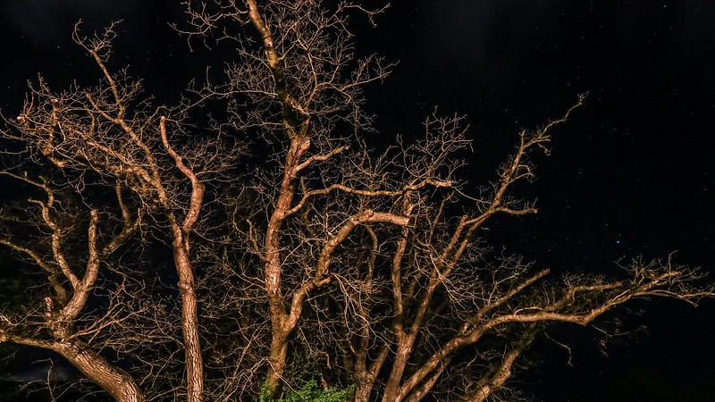 New Zealand Tree