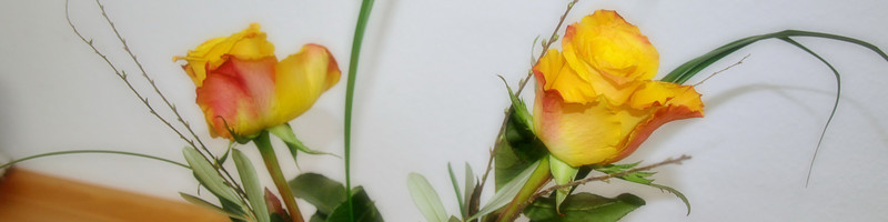 Yellow Roses Banner