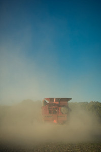A farmer combines a field of soybeans during the harvest