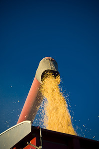 Corn pours into a grain wagon during harvest