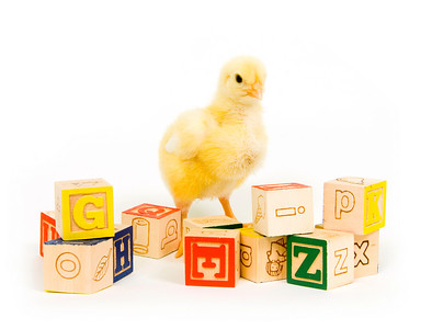 A baby chick stands among an assortment of toy blocks