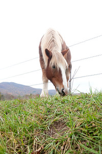 Horse feeding on the green grass from other side of the fence