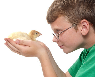 Young boy holding and observing young turkey