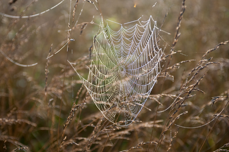 A spider web covered with dew in an open meadow