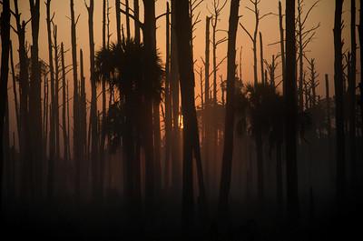 Sun rising over a swamp in Florida