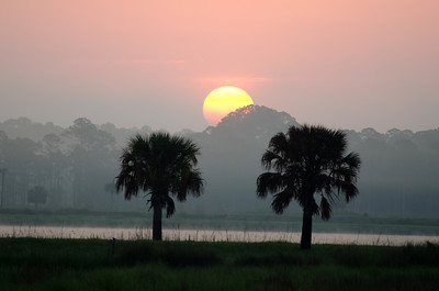 Sun rising over a swamp in Florida