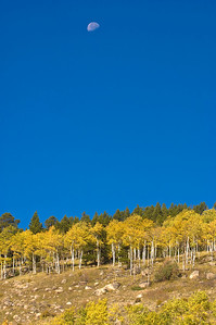 The moon stands out in the blue sky near the top of an aspen covered hillside in Rocky Mountain National Park