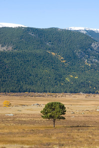 A single tree in an open field in Rocky Mountain National Park