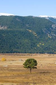 A single tree in an open field in Rocky Mountain National Park