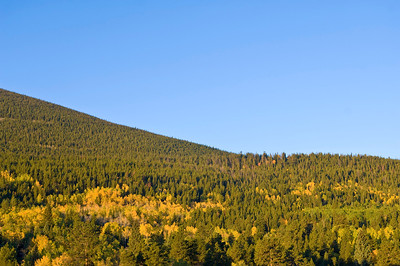 Pine trees cover the side of a mountain in Rocky Mountain National Park