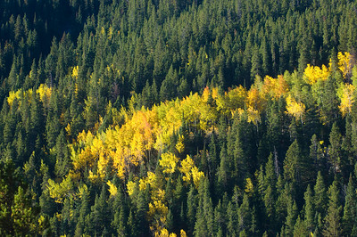 Fall colors along a mountainside in Rocky Mountain National Park
