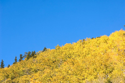 Aspen trees on a hillside in Rocky Mountain National Park