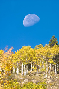 The moon, aspen tree and blue sky in Rocky Mountain National Park