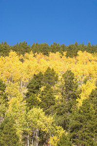 Blue sky and aspen trees in rocky mountain national park