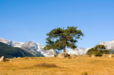 A lone tree stands out among the mountains and blue sky of Rocky Mountain National Park