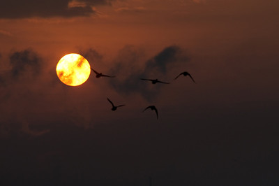 Flying geese are silhouetted by the rising sun over the Mississippi River