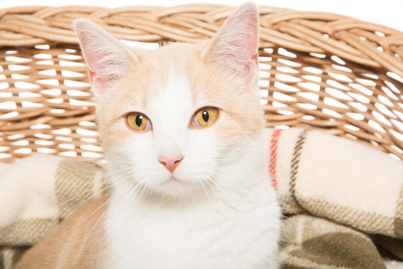 Cute cat in basket