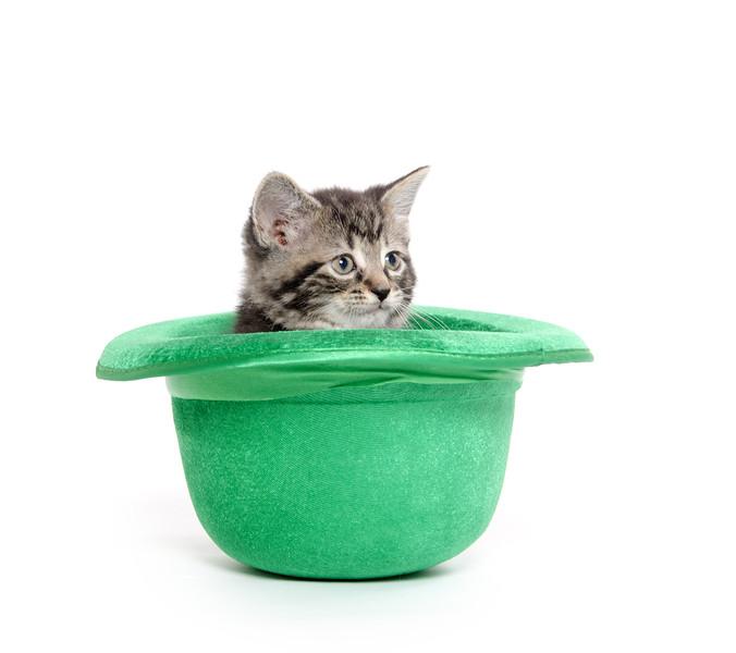 Cute tabby kitten in green hat