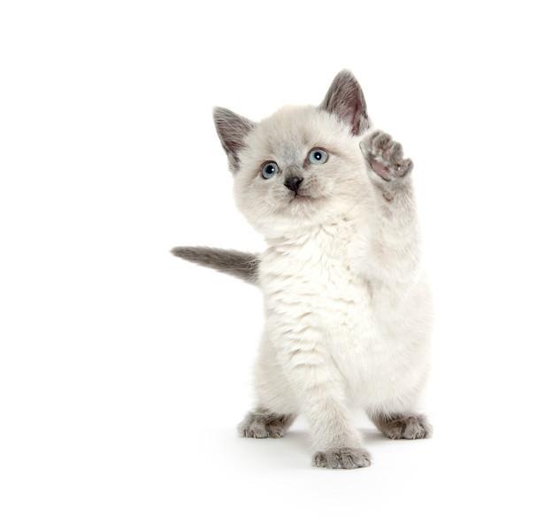 Cute kitten playing on white