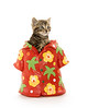 Cute tabby kitten in Hawaiian shirt