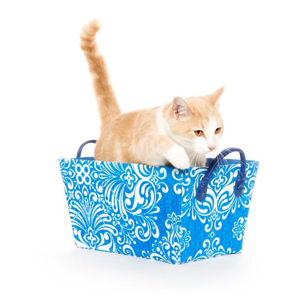 Cute cat in blue basket