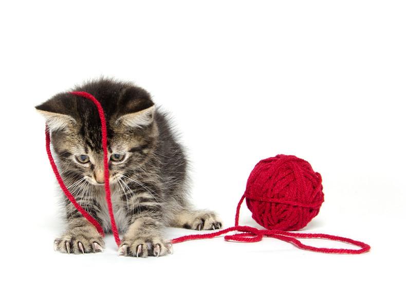 Tabby kitten with yarn