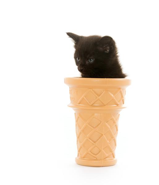 Kitten in ice cream cone
